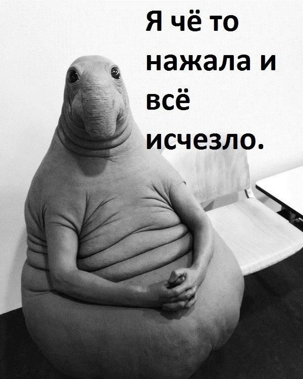 1485265069188571085.jpg