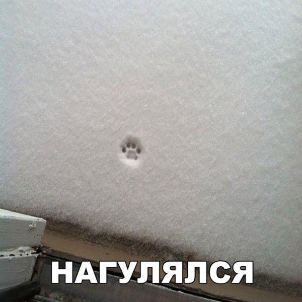 1514312904_korzik_net_prikol-28.jpg