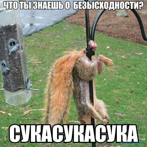 1549705950_korzik_net_2019-2-7-17_46_3303.jpg