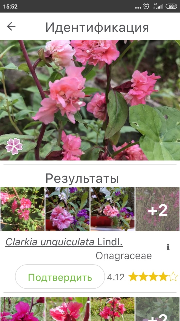 Screenshot_2020-07-21-15-52-43-520_org.plantnet.jpg